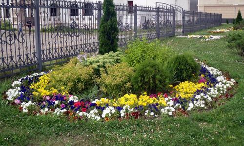 Цветы для клумбы: цветущие и многолетние. Какие посадить лучше? Фото