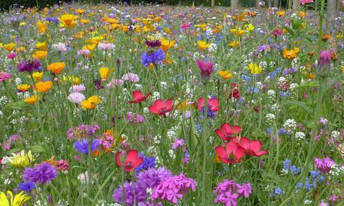Как называется газон из цветущих пестрых трав
