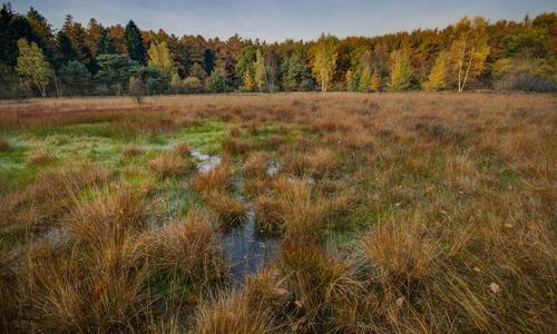 Осушение болот плюсы и минусы