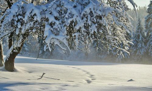 Какие погодные условия конец ноябрь - начало декабря