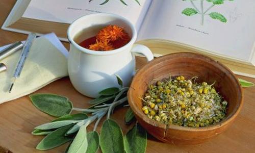 Лекарственные травы от простуды и воспалительных процессов