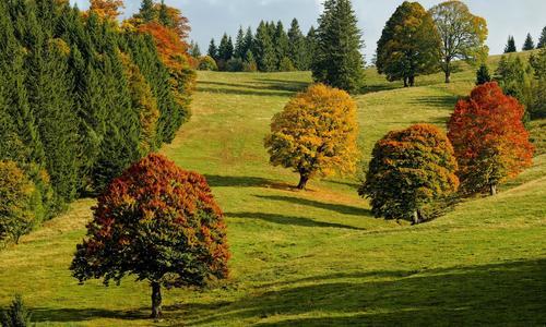 Какие деревья имеют красные листья осенью