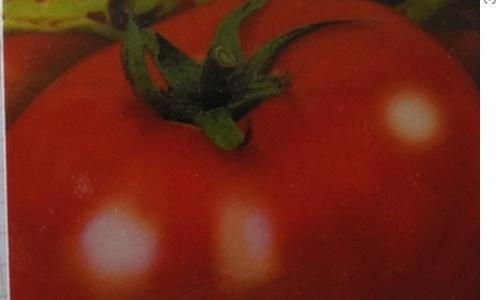 Томат Клуша - описание сорта, характеристика, урожайность, отзывы, фото