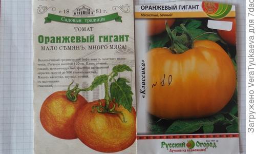 Томат Оранжевый гигант: характеристика и описание индетерминантного сорта с фото
