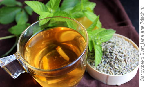 Заваривают ли лаванду в чай
