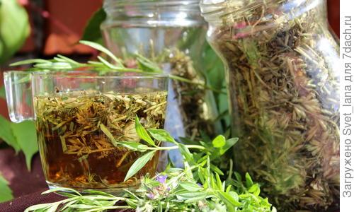 Лекарственное растение иссоп