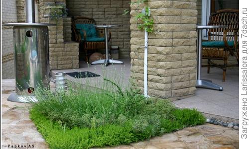 От базилика до эстрагона. Чем полезны пряные травы и как их выращивать