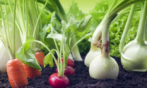 Сколько можно собрать урожая