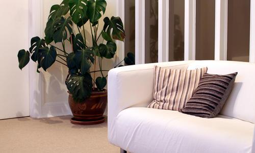 Как правильно расставить цветы в доме? Лучшие и худшие места для комнатных растений