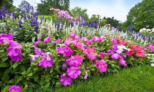 Какие комнатные цветы любят кислую почву