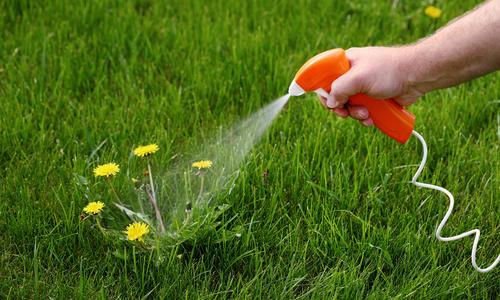 Подскажите гербицид для газона против пырея