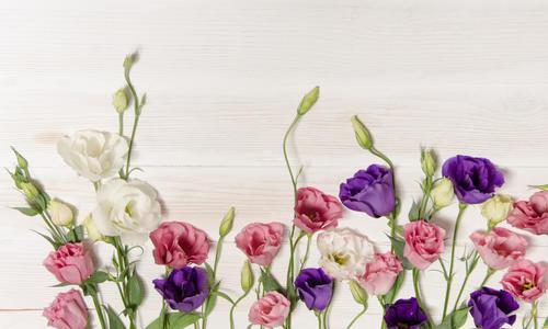Эустома многолетняя - посадка и уход, выращивание лизиантуса из семян в домашних условиях и в открытом грунте