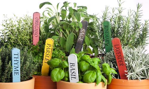 Бирки для маркировки растений: как выбрать и как сделать. Фото