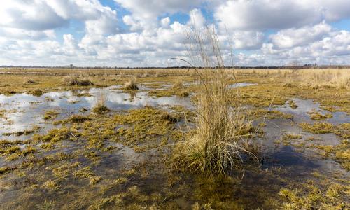 Проблемы заболоченного участка и их решения || Дизайн болотистого участка - превращение болота в цветущий сад видео