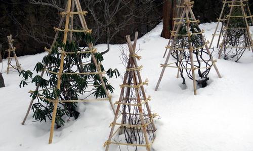 Укрывной материал для сада на зиму