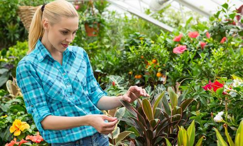 Как оформить сад зимой