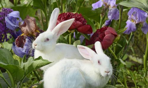 Кролики на даче содержание