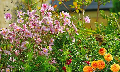 Осенние цветы в саду, названия и фото