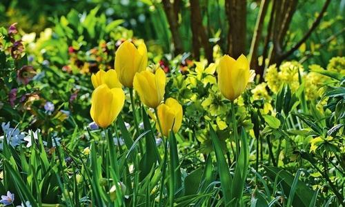 Садовые желтые цветы многолетники: названия и фото, высокие и низкорослые