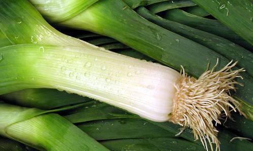 Пикантный лук-порей: посадка и выращивание