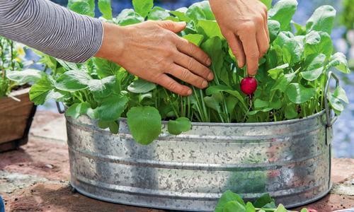 Репа, редис и редька - продукты, которые спасут Вас этой зимой