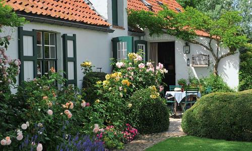 Розовые сады англии