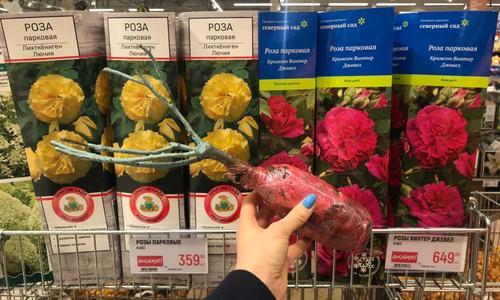 Как сохранить купленные саженцы роз и пионов до посадки