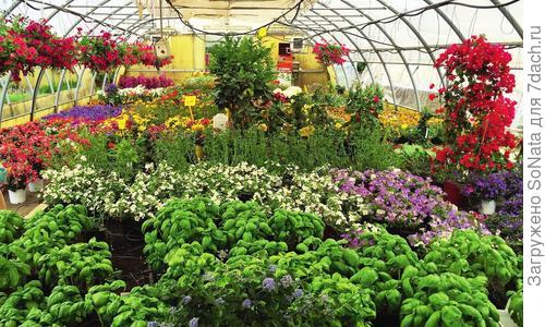Как выращивать саженцы с закрытой корневой системой