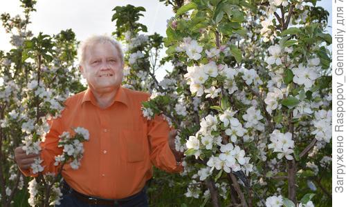 Колоновидные яблони для ленинградской области сорта