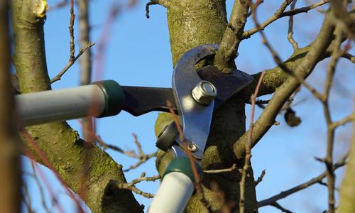 Как правильно обрезать деревья и зачем это делать