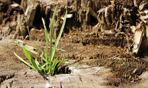 Пырей ползучий – трава и корень: лечебные и полезные свойства и противопоказания. Пырей — народное средство лечения онкологии, рефлюкса, суставов, сахарного диабета, зрения