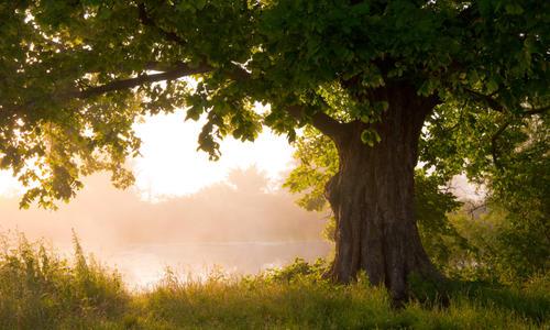 Листья и плоды дуба