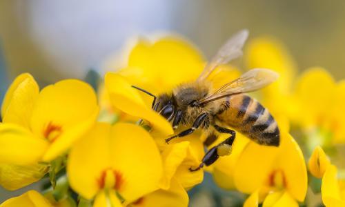 Аллергия на укусы насекомых у детей: симптомы и лечение