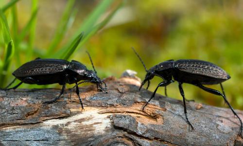 Полезные насекомые - санитары сада: фото, описание