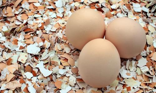 Как принимать яичную скорлупу - Здоровый образ жизни