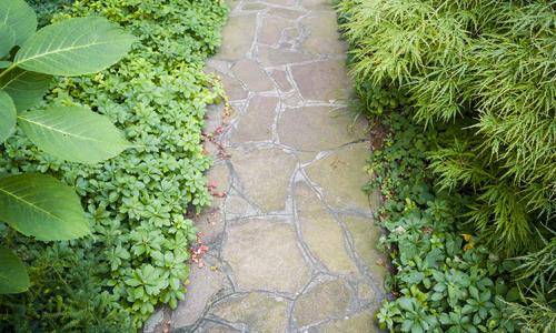 Тенелюбивые растения для сада (50 фото): какие цветы растут в тени на даче? Какие теневыносливые кустарники можно сажать в полутень?