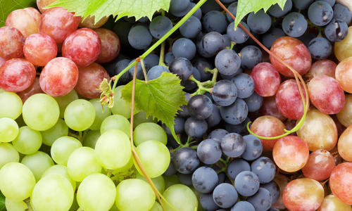 Синий виноград польза и вред для организма
