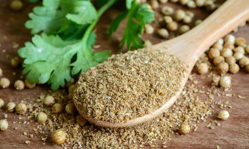 Семена кинзы полезные свойства