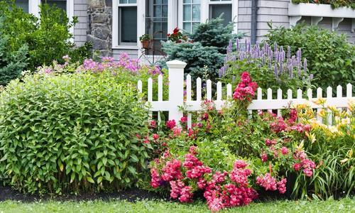 Растения для палисадников с любой стороны дома