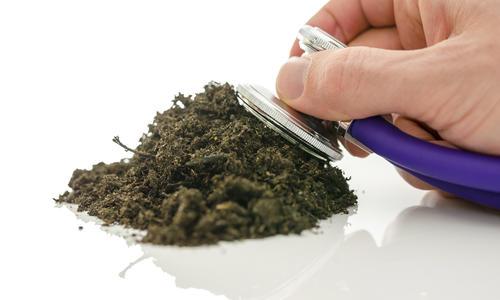 Есть нюансы: как использовать биопрепараты с максимальной выгодой для рассады