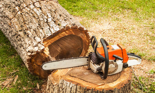 Спил валка деревьев