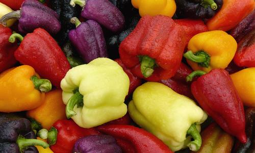 Сладкий перец -  обзор самых лучших и высокоурожайных сортов