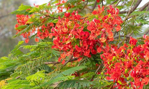 Экзотические деревья для средней полосы: уход и размножение