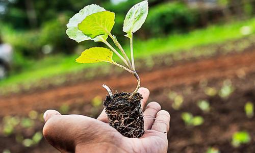 Гетероауксин для растений: действие, показания к применению, правила и способы использования