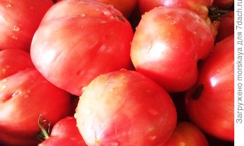 Томат Бычье сердце - описание и выращивание