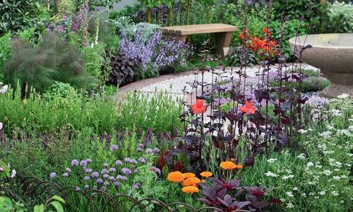 Многолетние декоративные злаки для сада