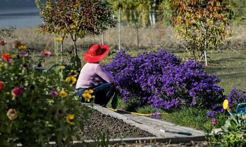 Подготовка многолетних растений к летнему сезону