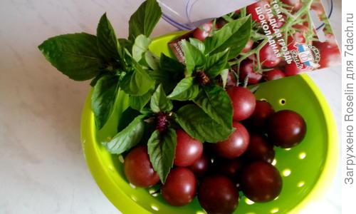 Томат Сладкая гроздь шоколадная - описание сорта