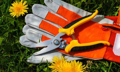 Как выбрать садовый секатор - советы по выбору и подбору характеристик