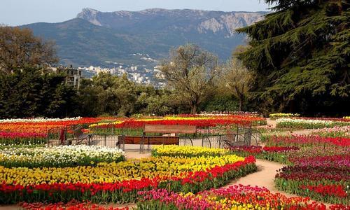 Тюльпан парад описание - Сад и огород